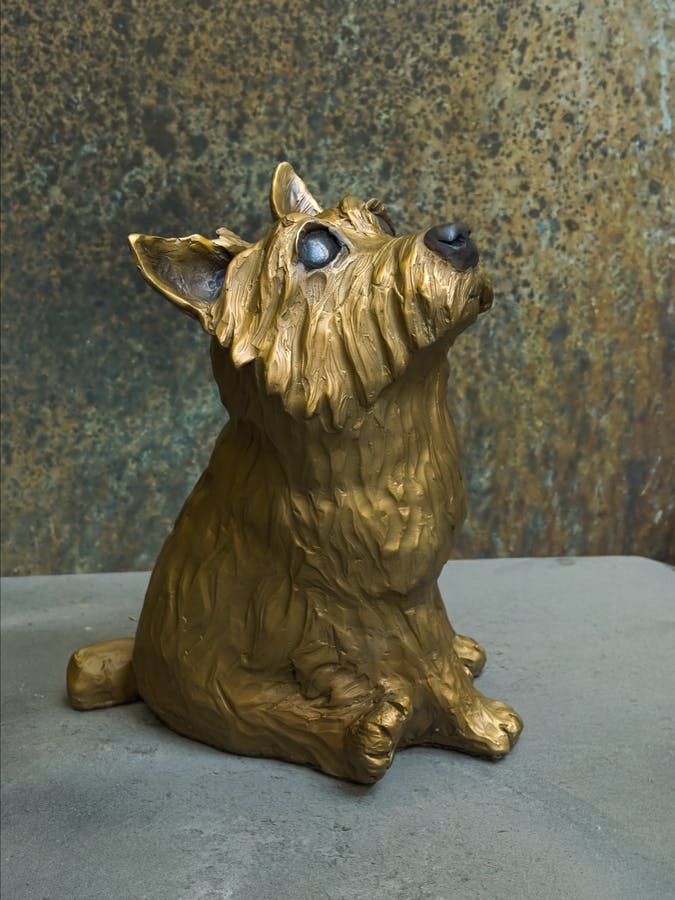 Norwich Terrier Sitting